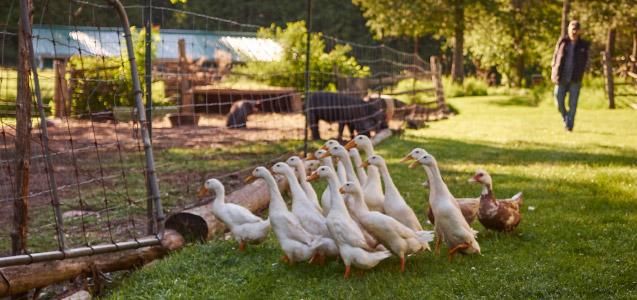 viamede-banner-farm