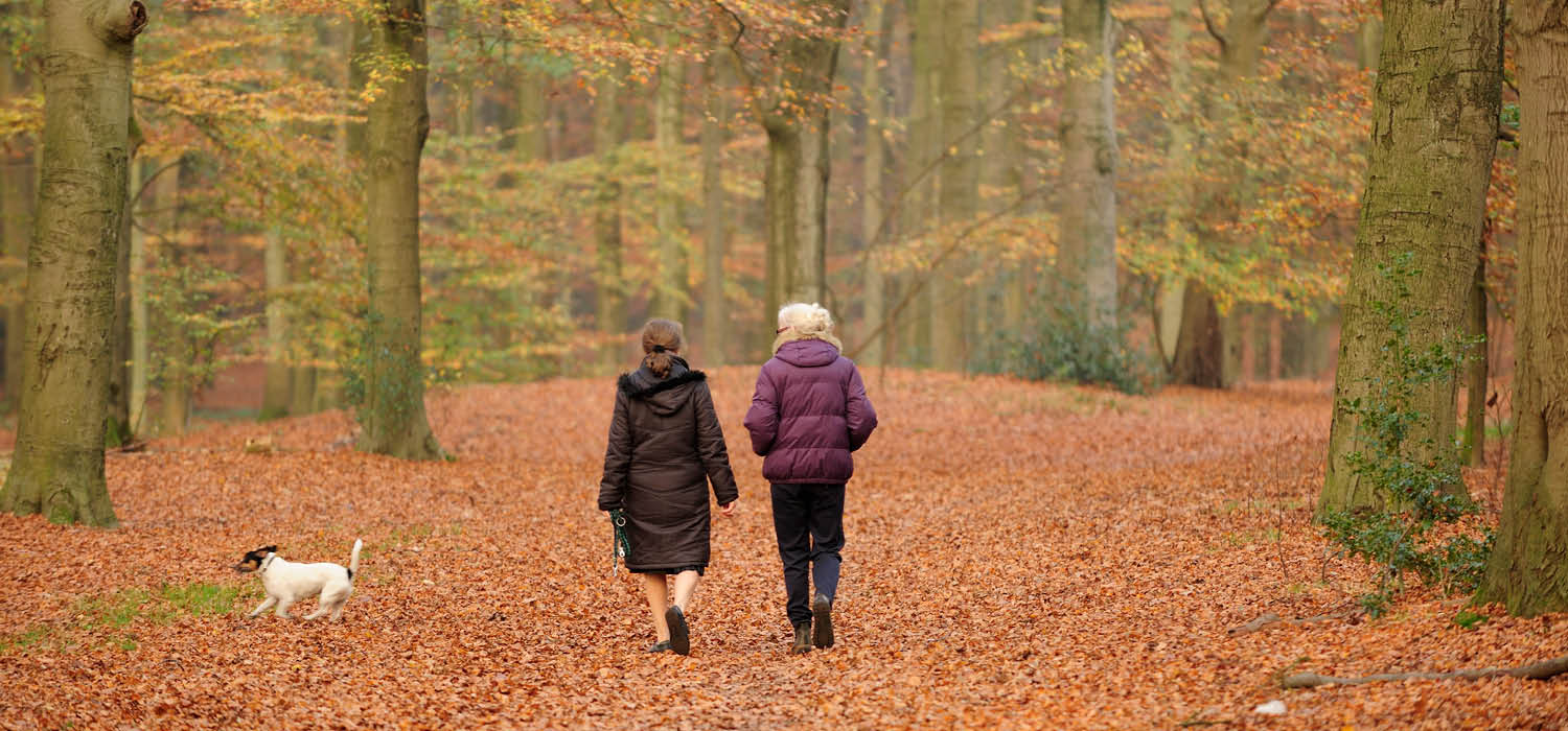 Photo of two women and a dag walking in an autumn forest