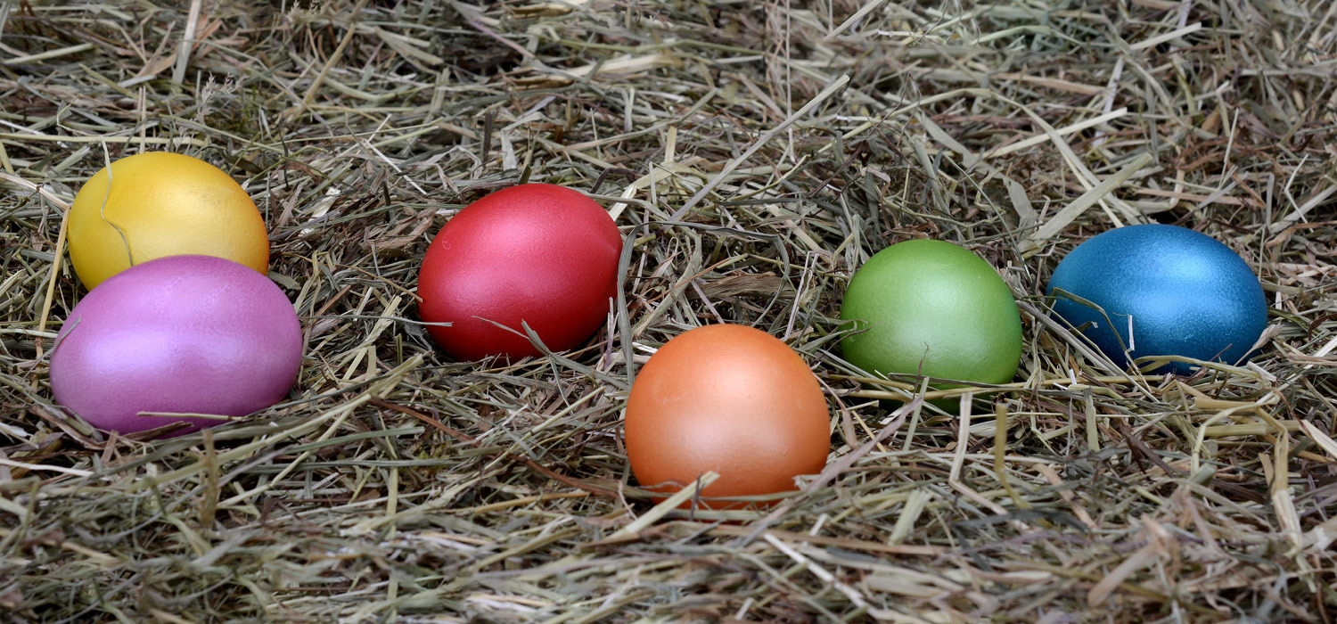 Photo of coloured easter eggs on a bed of hay
