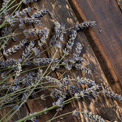 Lavender flowers on a wood background