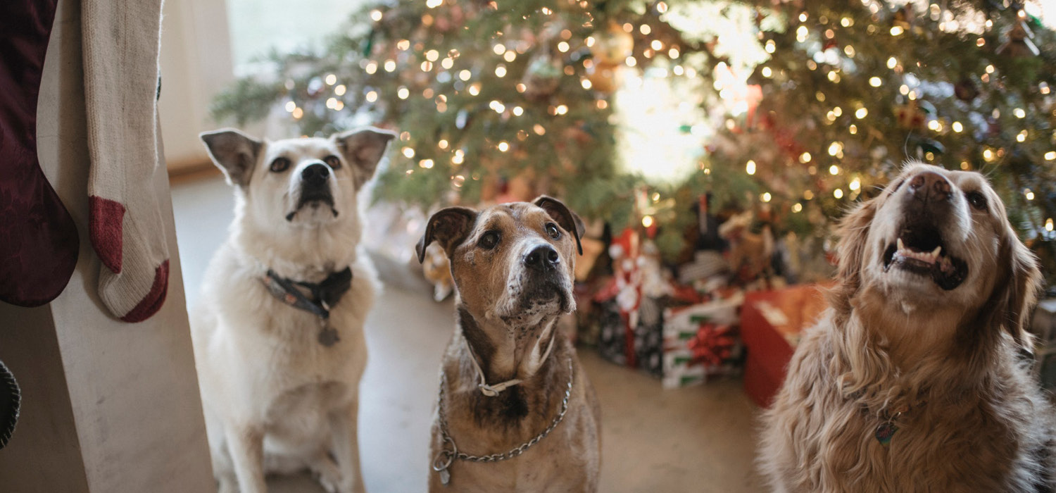 a couple of dogs sitting in front of a Christmas tree